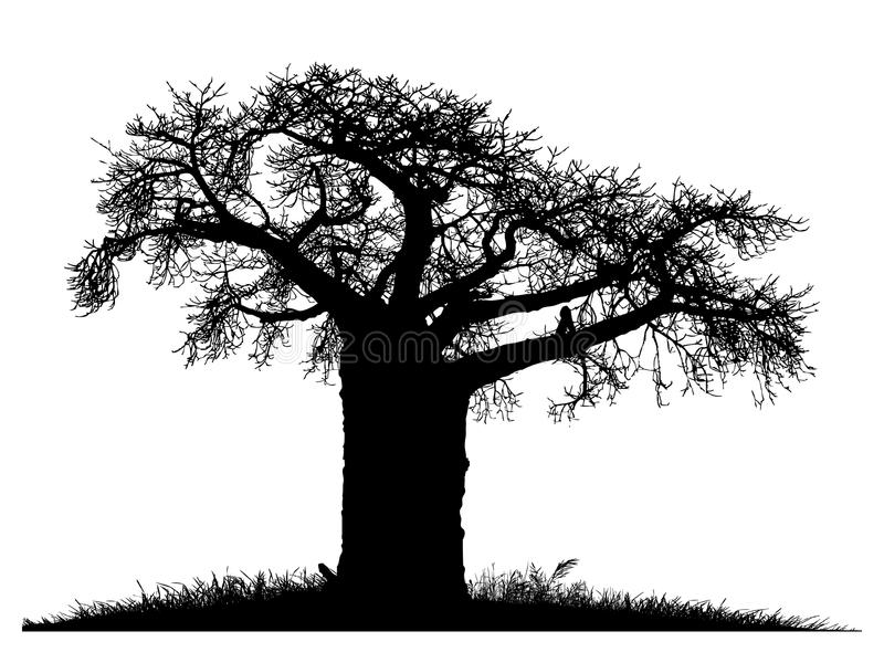 Silhouette of a baobab tree stock illustration