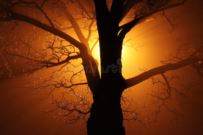Silhouette of Bare Tree Against Sunlight royalty free stock photo