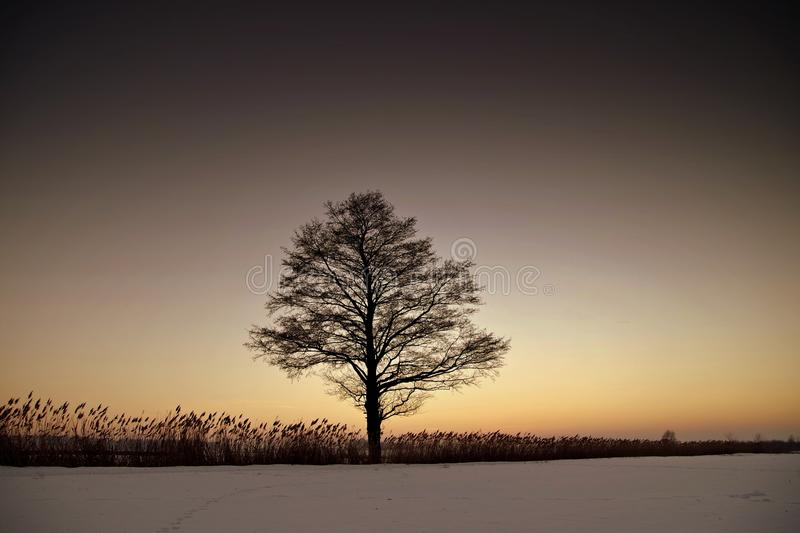 Silhouette Bare Tree on Landscape Against Sky during Sunset royalty free stock photography