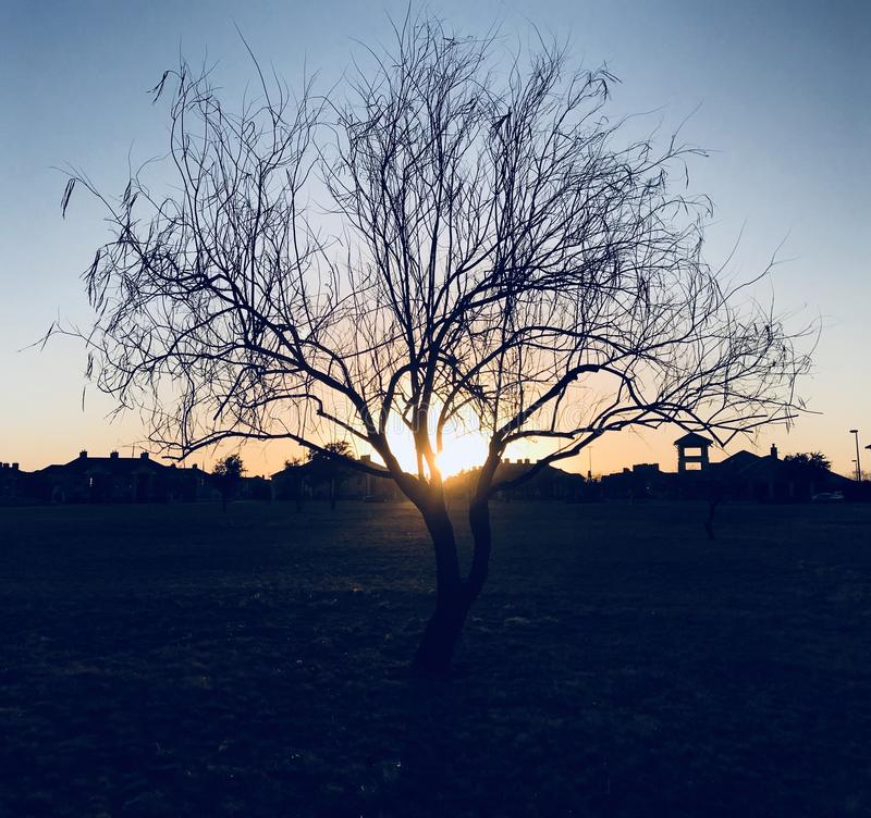 Silhouette of Bare Tree during Sunset royalty free stock photos