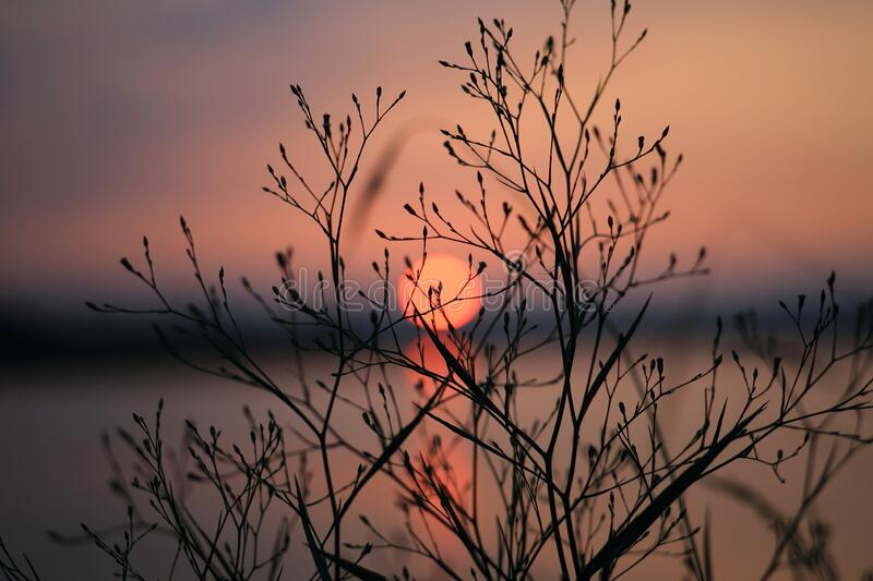 Silhouette of Bare Tree during Sunset stock images