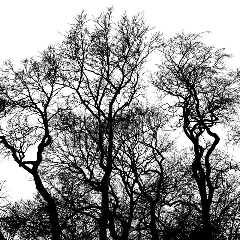 Silhouette of bare trees, black interlaced branches royalty free stock images