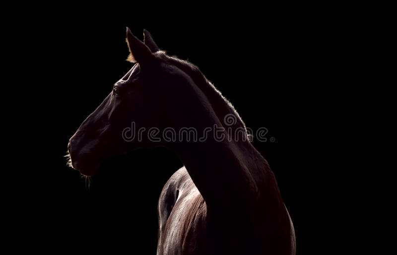 Download Silhouette Of Beautiful Horse Stock Photo - Image of racehorse, portrait: 21441104
