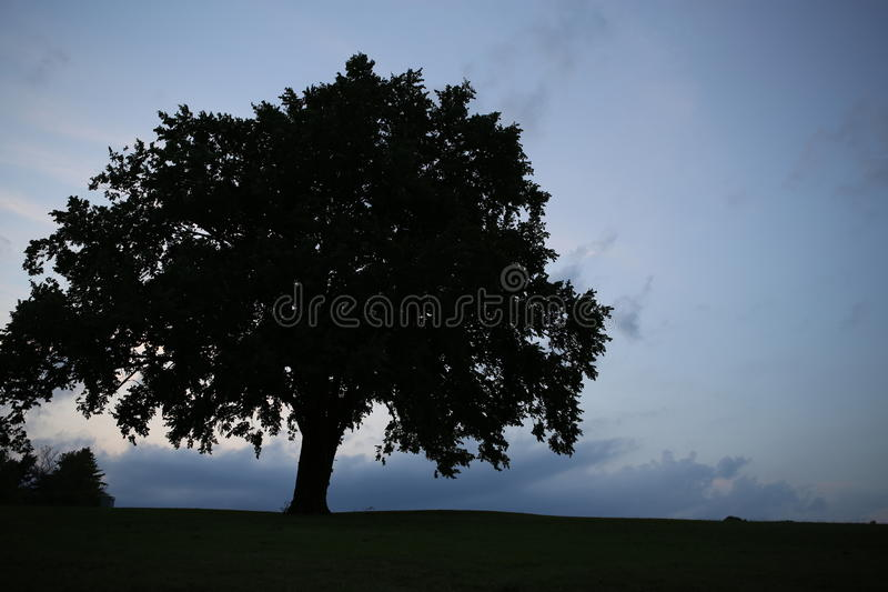 Silhouette of a beautiful tree royalty free stock photo