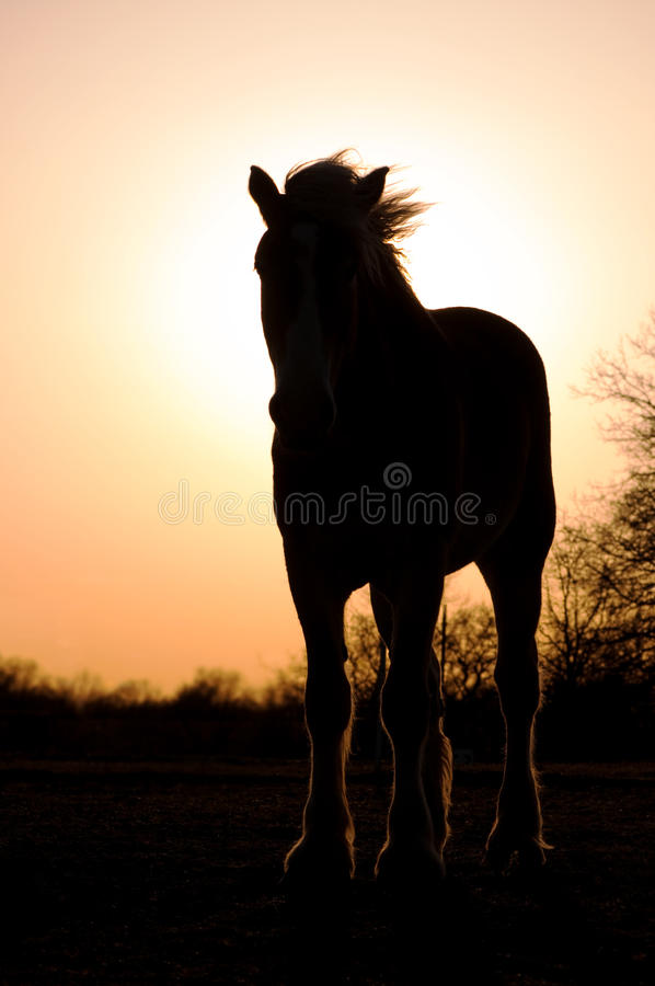Silhouette Of A Belgian Draft Horse Royalty Free Stock Images