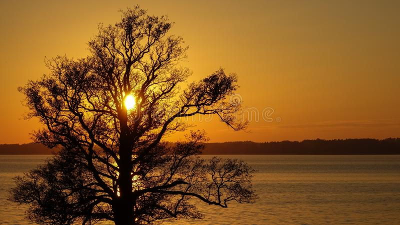 Silhouette of a big old oak at the lake in sunset. royalty free stock photography