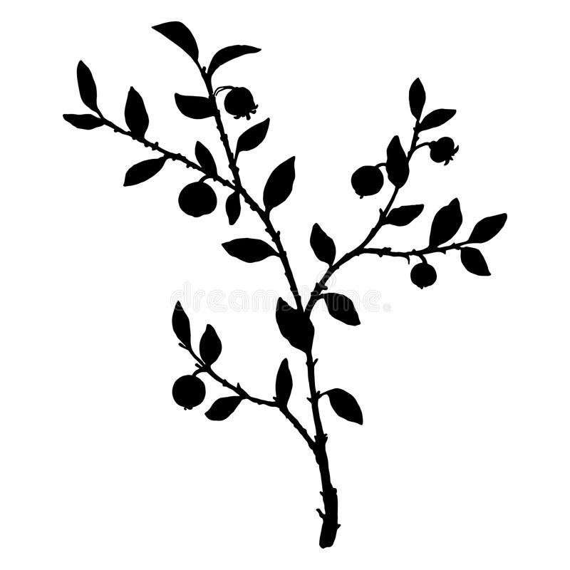 Silhouette of bilberry plant. Branch with leaves, flowers and berries, isolated floral element, hand drawn illustration stock illustration