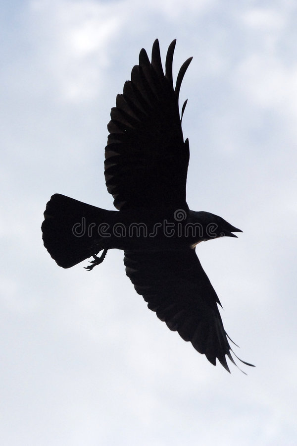 Free Silhouette Bird Royalty Free Stock Photos - 6450588