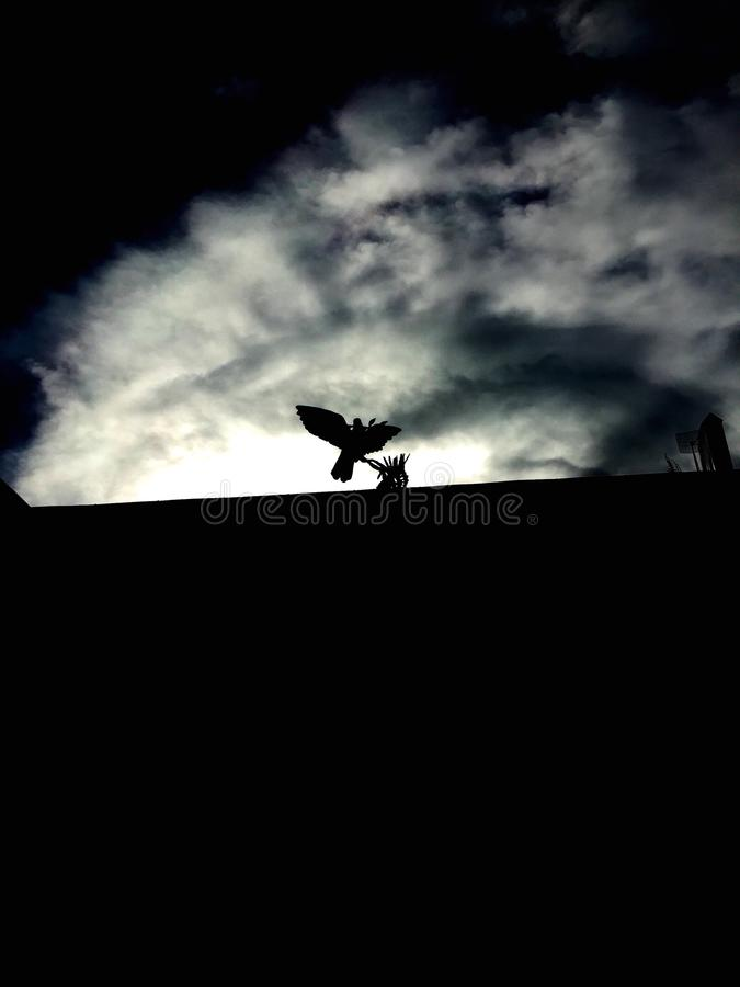 Silhouette of the bird stock image