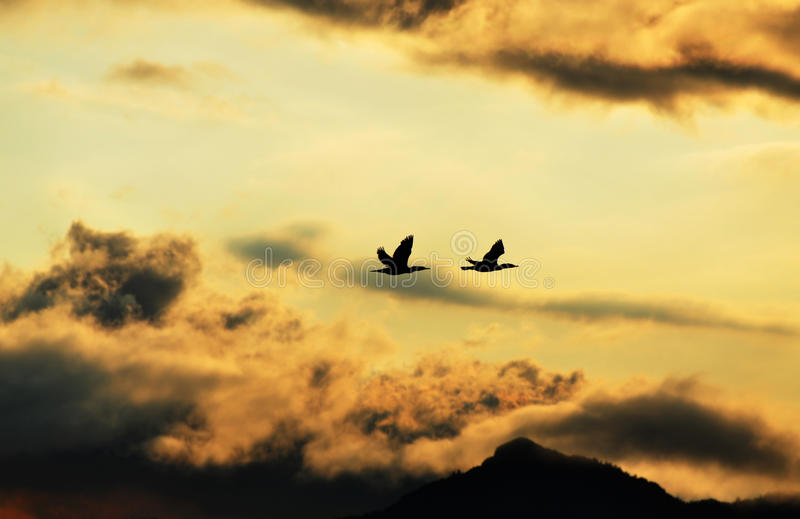 Silhouette of birds flying home in dark storm clouds. A stormy afternoon at sunset by the lake and we spot this pair of ducks flying home to miss the approaching royalty free stock image