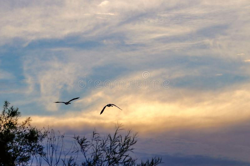 Silhouette of birds flying at sunset. Over a lake and trees stock images