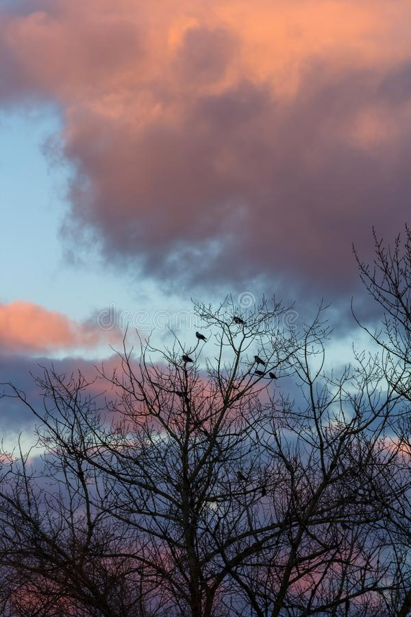 Silhouette of birds on the tree with no leaves at winter with sunset colourful clouds in the background stock images