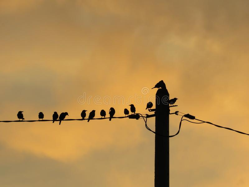 Silhouette Of Birds On The Wire. A flock of birds, the Asian Glossy Starling, gathering on the electrical wire resting against the yellow glow of the evening sky royalty free stock photography