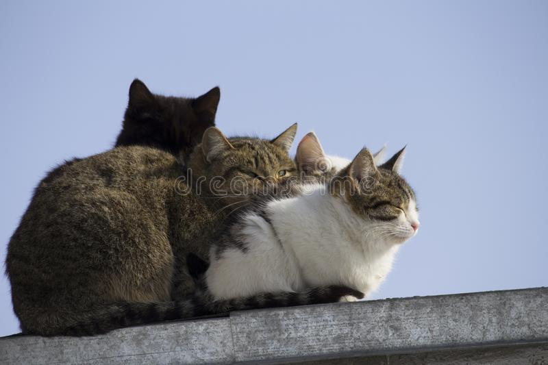 Silhouette of a black cat`s head among several cats on the roof royalty free stock image