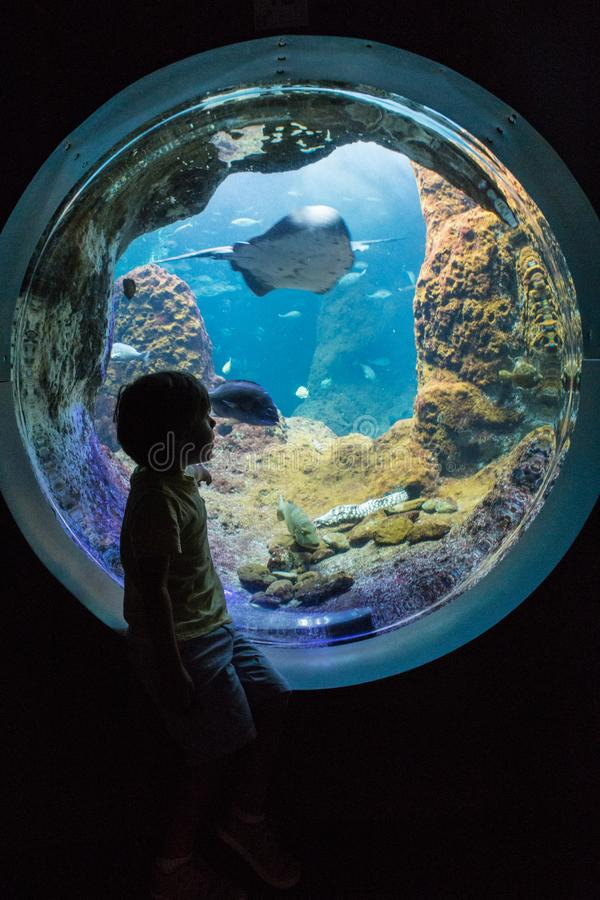 Silhouette of boy at aquarium royalty free stock photography