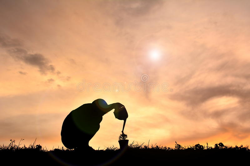 Silhouette boy planting a tree royalty free stock photo