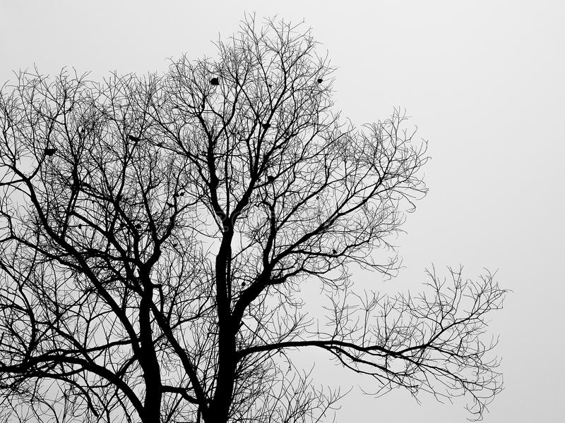 Silhouette branch of bald tree in the white fog in winter royalty free stock photography