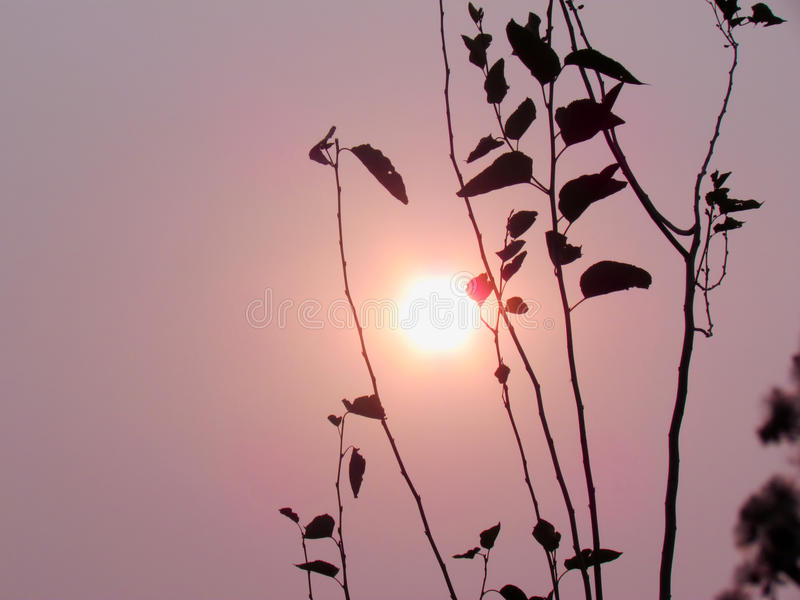 Silhouette branches and leaves with the sunset stock photos