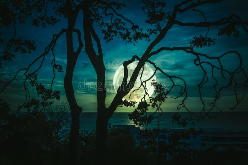 Silhouette branches of trees against sky and full moon above sea. Silhouette branches of trees against green sky and bright full moon above seascape. Beautiful stock photo