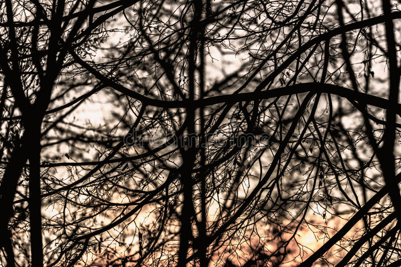 Silhouette of branches of the winter sky stock images