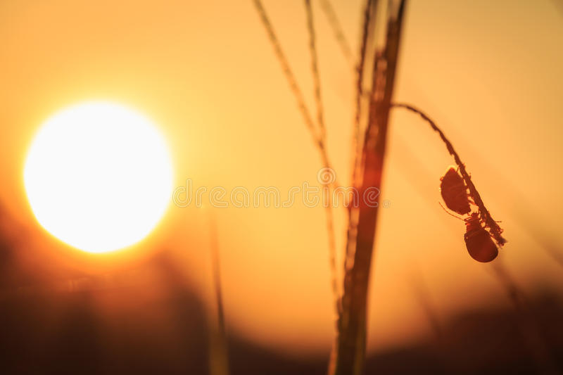 Silhouette of bug on grass royalty free stock image