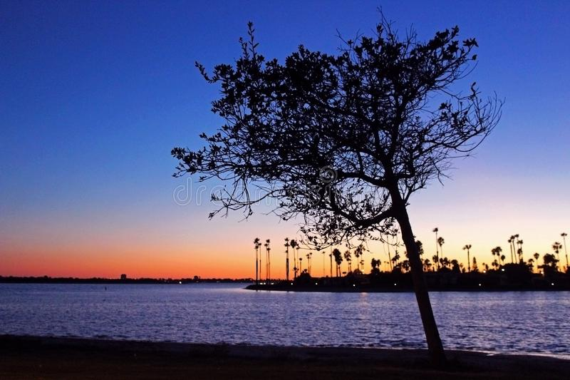 Silhouette of California Palm trees at dusk stock photo