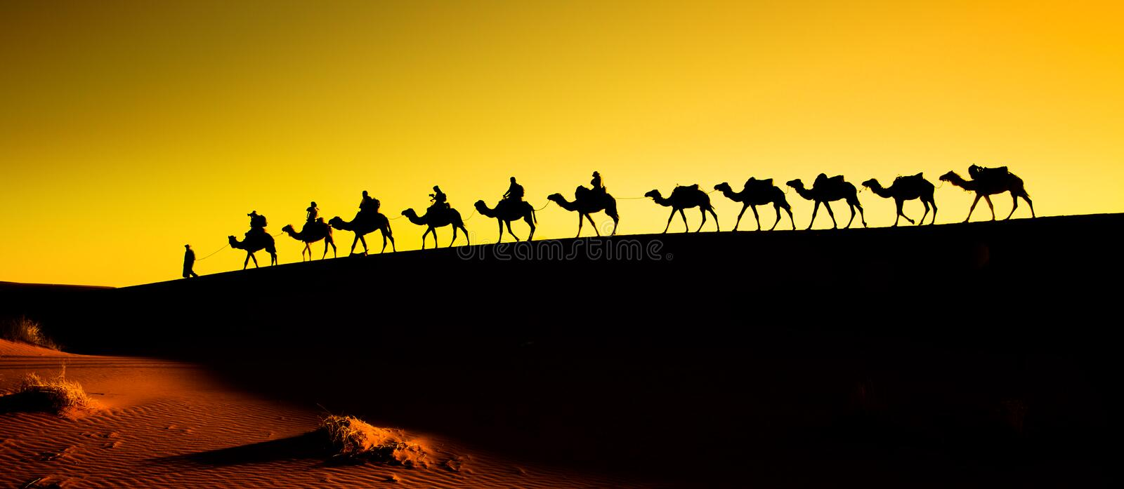 Silhouette of a camel caravan royalty free stock photography