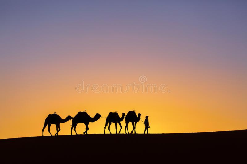 Silhouette of a camel caravan at sunrise in desert Sahara, Morocco.  royalty free stock photos