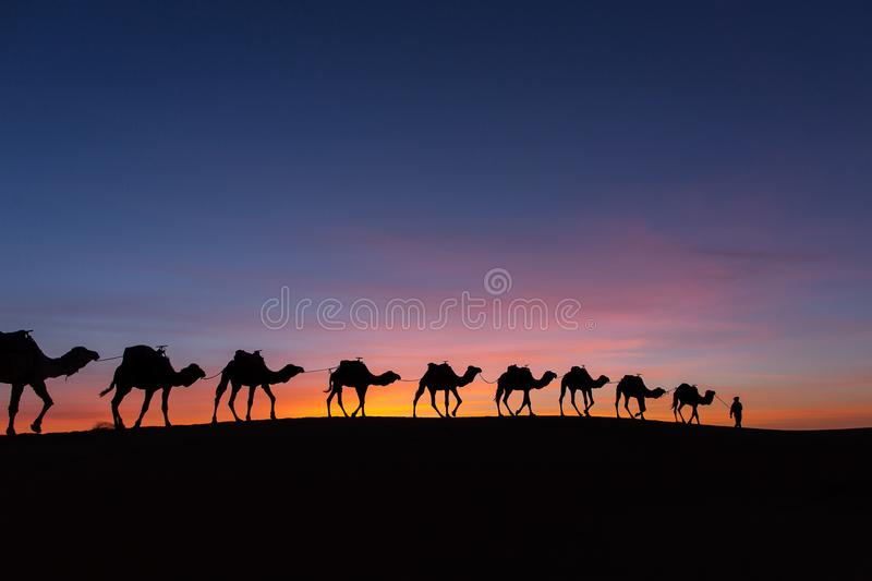 Silhouette of caravan in desert Sahara, Morocco with beautiful a. Nd colorful sunset in background royalty free stock photos