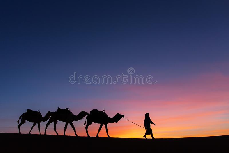 Silhouette of caravan in desert Sahara, Morocco with beautiful a. Nd colorful sunset in background stock photo