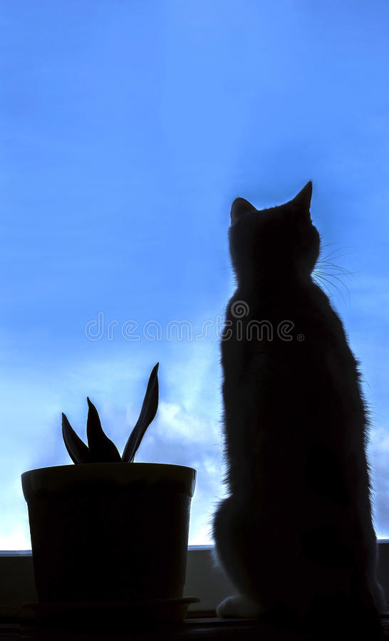 Silhouette of a cat looking out the window stock photo