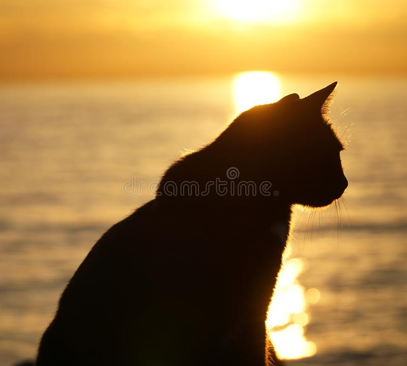 silhouette of cat royalty free stock photography
