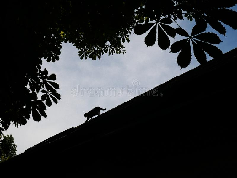 Silhouette of a cat walking on a roof of a restaurant in vienna austria stock image