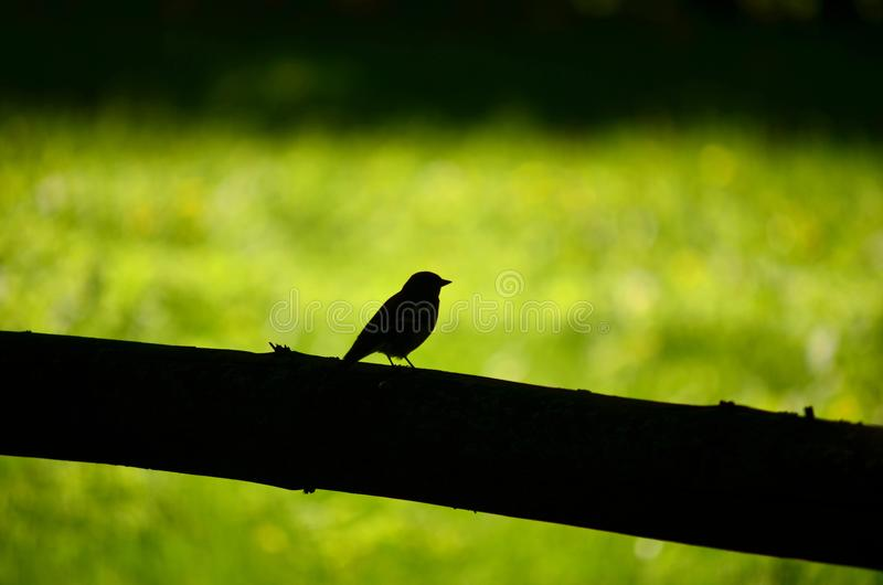Chaffinch sitting on wooden fence royalty free stock images