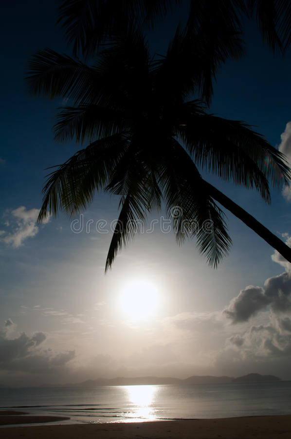 Download Silhouette Coconut Palm And Sea Stock Image - Image of beautiful, getaway: 26092261