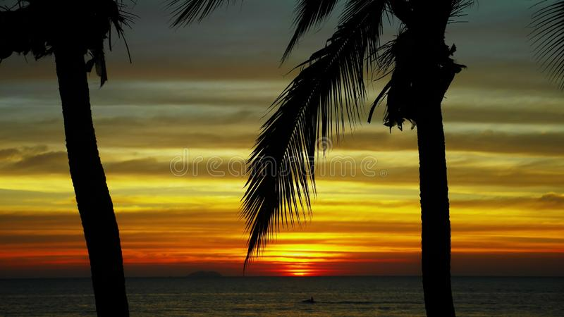 Silhouette of a coconut palm tree against the backdrop of a beautiful sunset on a tropical beach. stock photos