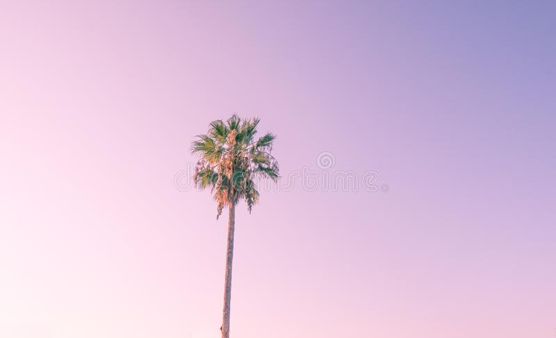 Silhouette coconut palm tree on beach at sunset. Vintage tone stock image