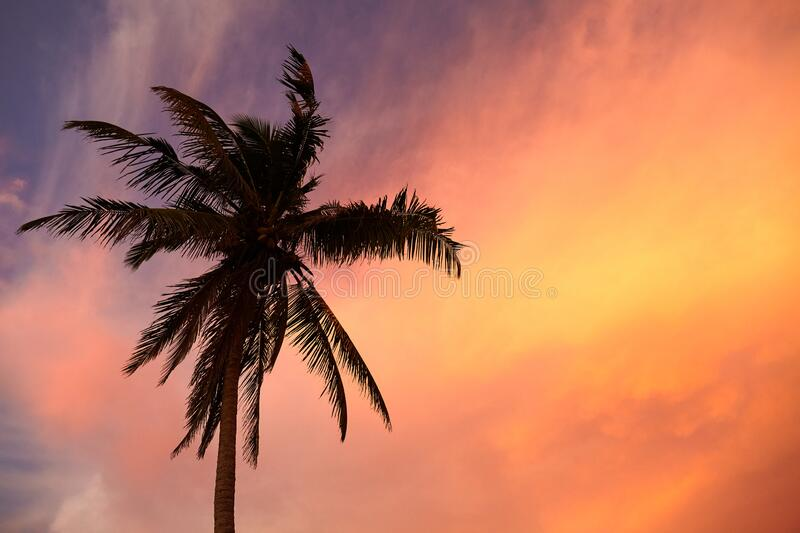 Silhouette of a palm tree at colorful sunset. Silhouette of a coconut palm tree at colorful sunset stock images