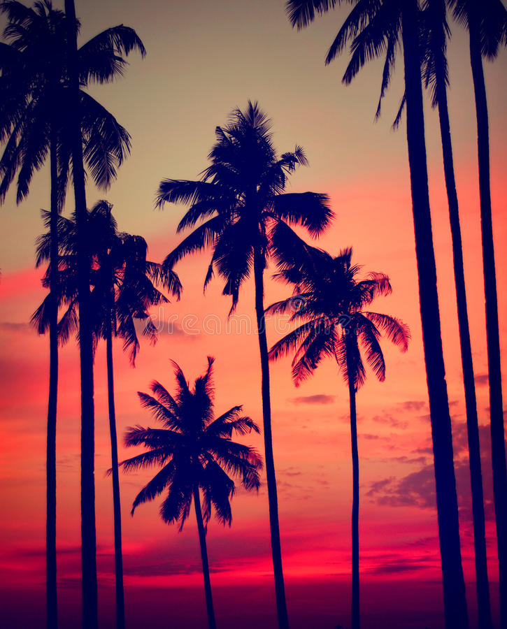 Silhouette Coconut Palm Tree Outdoors Concept.  royalty free stock photos