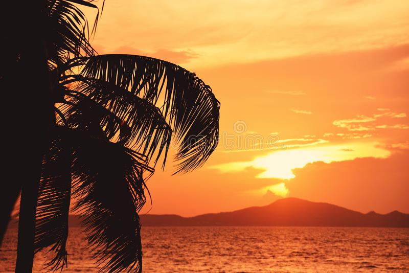 Silhouette coconut palm tree sunset ocean on the tropical beach sea summer orange sky and islands stock image