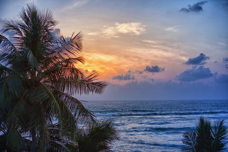 Silhouette of coconut palm trees against evening sea stock photography