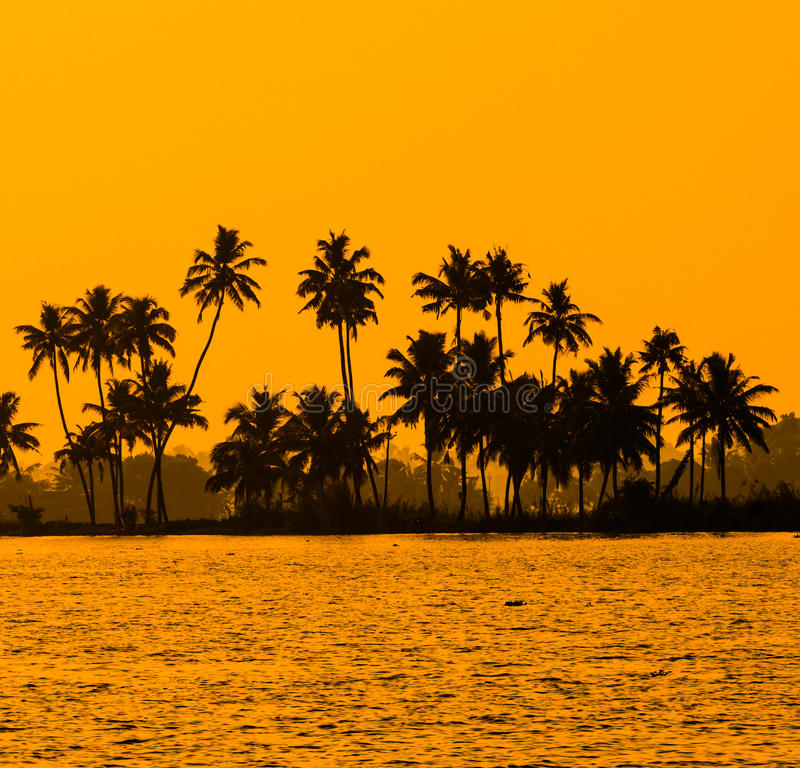 Silhouette of coconut palm trees at golden tropic sunset royalty free stock photography