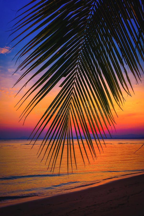Free Silhouette Coconut Palm Trees On Beach At Sunset. Royalty Free Stock Images - 65797939