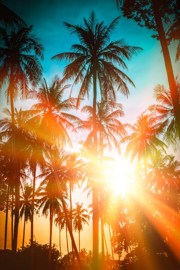 Free Silhouette Coconut Palm Trees On Beach At Sunset. Vintage Tone Royalty Free Stock Images - 176472999