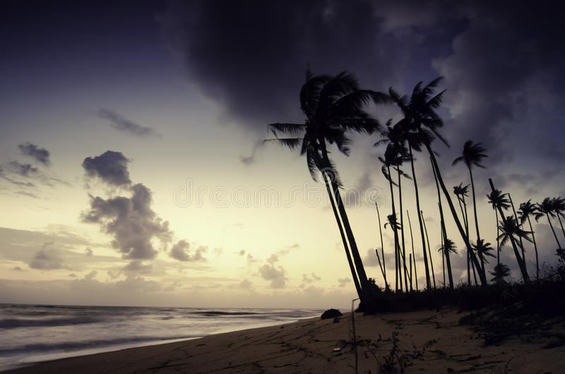 Silhouette of coconut tree on the beach.yellow color on the sky,soft and dramatic clouds. Blurred image silhouette of coconut tree on the beach.yellow color on royalty free stock images