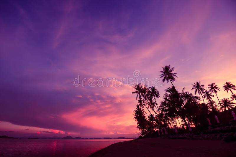 Silhouette of coconut trees by the beach against sunset sky background. Silhouette of coconut trees by the beach against dramatic red sunset sky background royalty free stock photo