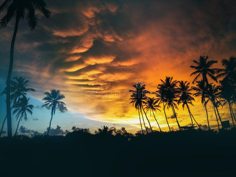 Silhouette Of Coconut Trees Under Dark Clouds During Golden Hours Free Public Domain Cc0 Image