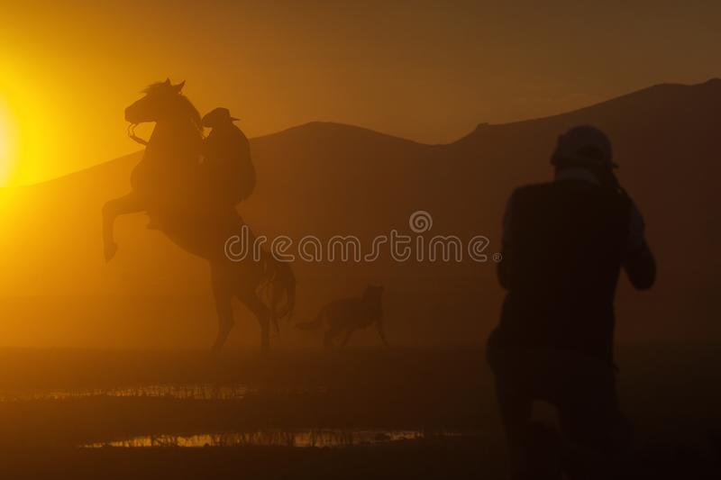 Silhouette of a cowboy puting his horse to stay in two feets at stock image
