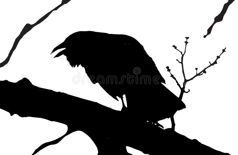 Silhouette of Crow on branch of a tree stock photos