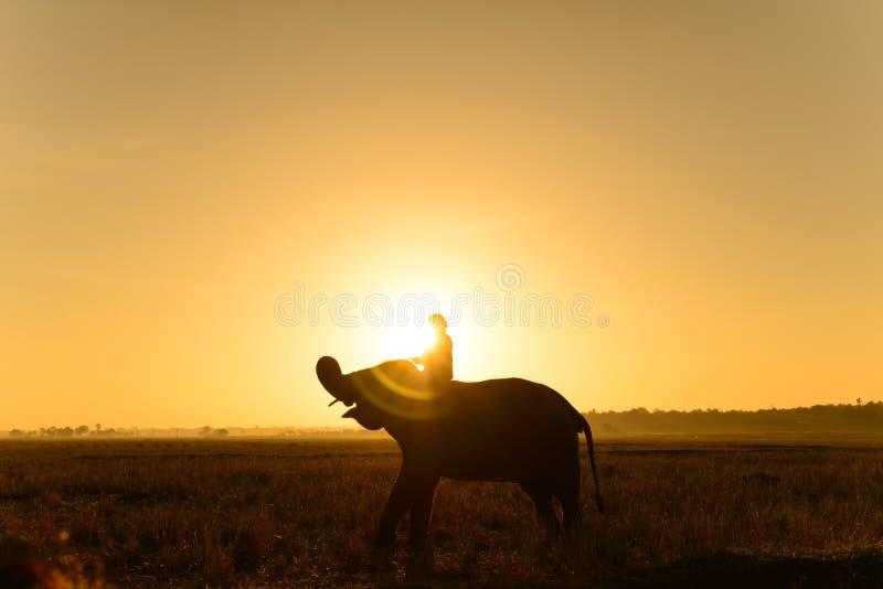 Silhouette d'éléphant et de mahout photos libres de droits